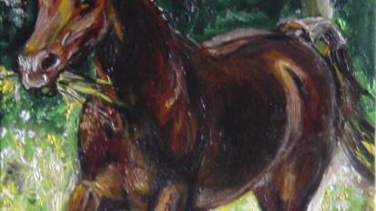 Cavallo Fulvo